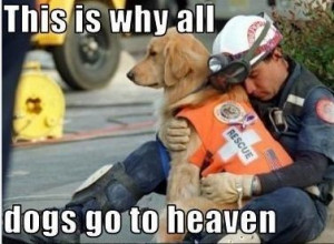 Why dogs go to heaven!