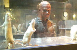 ... Box Office Collections of Emraan Hashmi and Amyra Dastur starrer MR.X