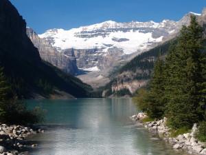 Canada Alberta Banff National Park Lake Louise Flowers Looking