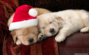 HD Wallpapers » 1680x1050 » Christmas » cute-christmas-puppies ...