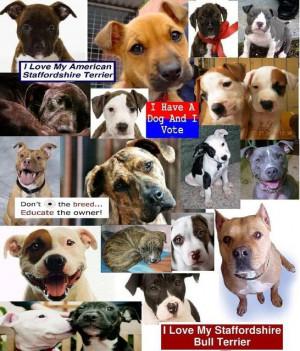 Famous Pit Bull Quotes http://hawaiidermatology.com/pitbull/pitbull ...
