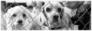 Every Quote Gives Hope to a Homeless Pet