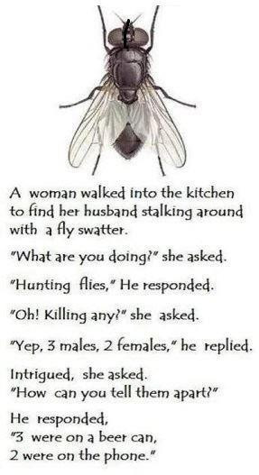Laugh, Quotes, Funny Pictures, Funny Jokes, Hunting Fly, Funny Stuff ...