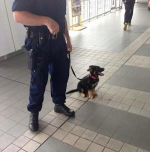 Police Dog!