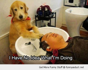 dog washing mans hair salon no idea doing animal funny pics pictures ...
