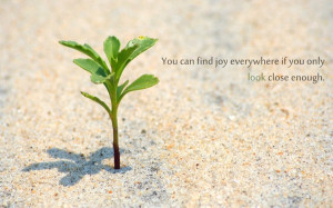 ... sand quotes description sand quotes plants 1600x1000 wallpaper is a