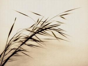 Werk is het beste stuk van de Zen-praktijk en -beoefening. Wat voor ...