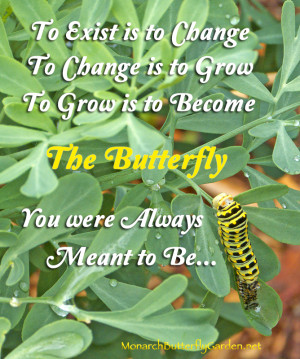Black Swallowtail Caterpillar- Inspirational Quote about Growth