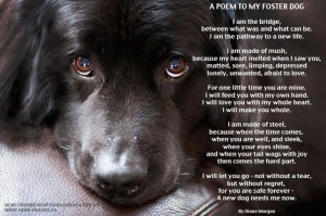 ... right now, fostering dogs quote | Poem to My Foster Dog | Voices