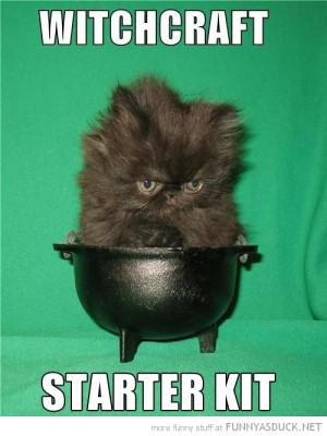 black cat kitten lolcat animal witchcraft starter kit cauldron funny ...