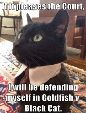 funny lawyer cat