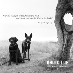 Go Back > Gallery For > Wolf Quotes About Strength