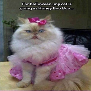 my cat is going as honey boo boo funny cat kitty funny quotes ...