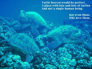 Turtle heaven would be perfect./A place with lots and lots of turtles ...