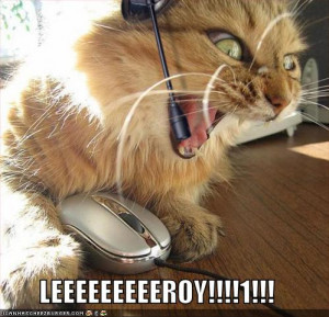 funny lol cat seems angry leroy image photo picture