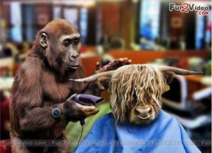 Funny Barber For Perfect Haircut