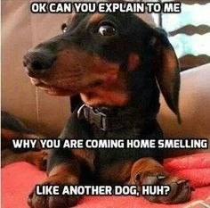 ... dogs wienies more funny picture quotes come home weenie dogs funny