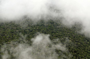 Amazon Rainforest aerial photo