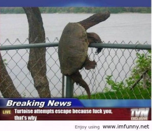 ... turtle / Funny Pictures, Funny Quotes – Photos, Quotes, Images, Pics