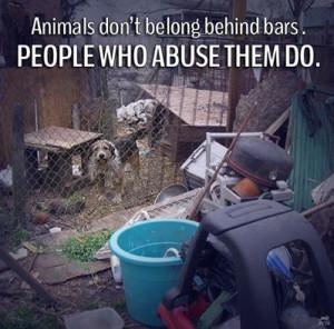 Animal Advocacy, Animal Cruelty, Animal Welfare, Animal Abuse, Animal ...