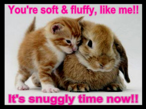Animal Quotes: Funny Quotes And Sayings With Picture Of The Cat ...