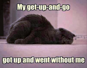 get up and go, funny cats