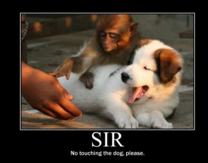 Please Sir No Touching Of The Dog   Random Funny Pictures