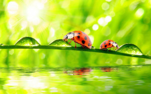Attachment for Beautiful Ladybugs Macro Photography High Resolution ...