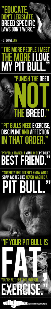 Top 10 Quotes by Pit Bull Owners Graphic