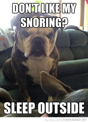 angry grumpy dog animal don't like snoring sleep outside funny pics ...