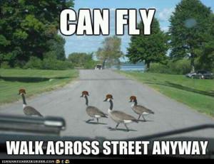 advice animals memes - Animal Memes: Scumbag Geese