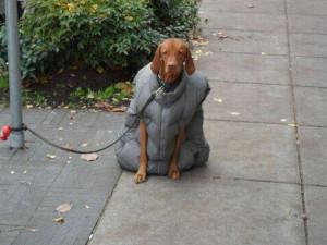 搞笑狗打扮