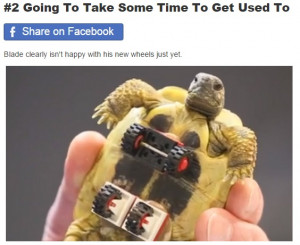 Tortoise Gets LEGO Wheelchair And Loves Every Second Of It (5 Pics)