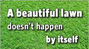 Lawn Tips - Your Lawn Will Thank you!