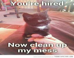 Very Cute Kitty Cat Sends Human Friend To Clean Up Funny Cute Picture ...