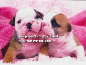 TK'S Toy Stand - Puppy Dogs & Kitty Cats Greeting Cards
