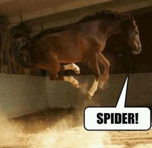 Funny SPIDER!