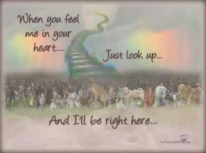 ... heart. .. just look up. .. and I'll be right here ... Rainbow Bridge