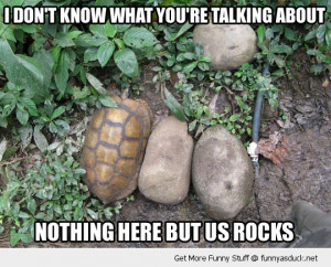 turtle rock hiding animal funny pics pictures pic picture image photo ...