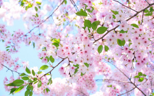 In the cherry blossom's shadethere's no such thingas a stranger ...