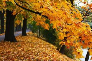 Autumn, Fall, Season, Colors, Nature, Landscape