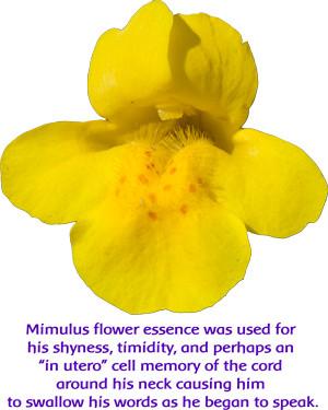California Wild Rose, Calendula, Golden Yarrow & Mimulus: