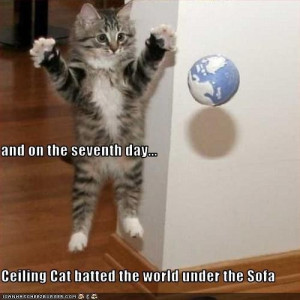 Cute picture captions quotes cute cat pictures with captions