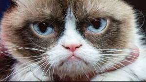 Grumpy Cat Quotes Grumpy Cat Quotes