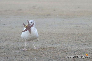 Funny Seagull Pictures Bird...