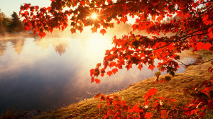 Home - Wallpapers / Photographs - Nature - Red autumn morning