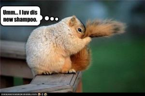 Random Squirrels