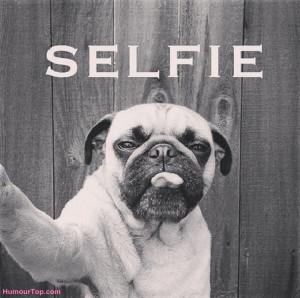 Les chiens et les selfies