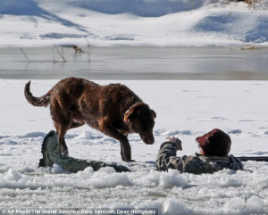 Loyal dog guards his master in freezing water for THIRTY MINUTES after ...