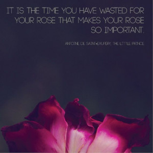 Rose Photograph | The Little Prince Quote | Nature Macro Photography ...